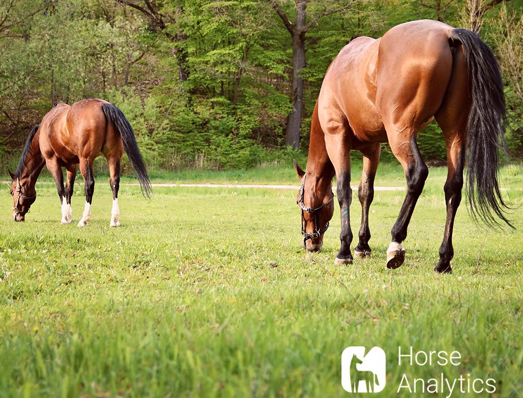 Hier sieht man ein Pferd, dass keine Giftpflanze isst.