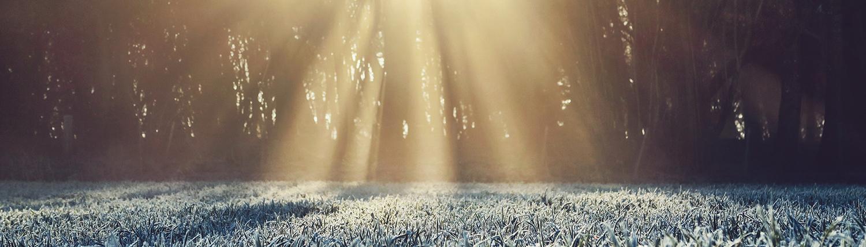 Eine Wiese, die mit Reif übersät ist, während die Sonne scheint