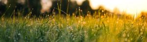 Eine Wiese, auf die die Sonne scheint