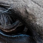 Ein Pferd, das erschöpft wirkt.
